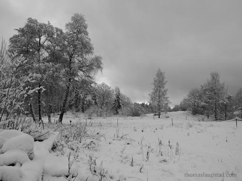 Svart hvitt bilde av ferskt snøfall på trær og jorde på Nesodden