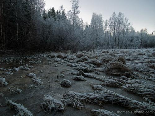Foto av frossen mark og rim på trær på Østlandet