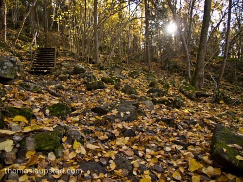 Bilde av høstskog - Skogbunnen dekt av gule blader