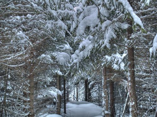 Bilde av snødekt granskog i Nord Norge - Som en scene fra Narnia