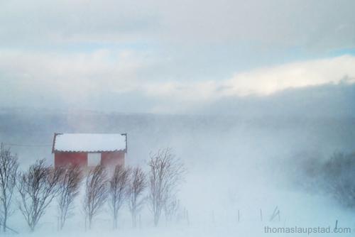 Bilde av snøstorm og fjøs i Nord Norge