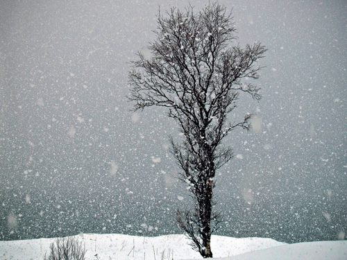Bilde av fallende snø og tre