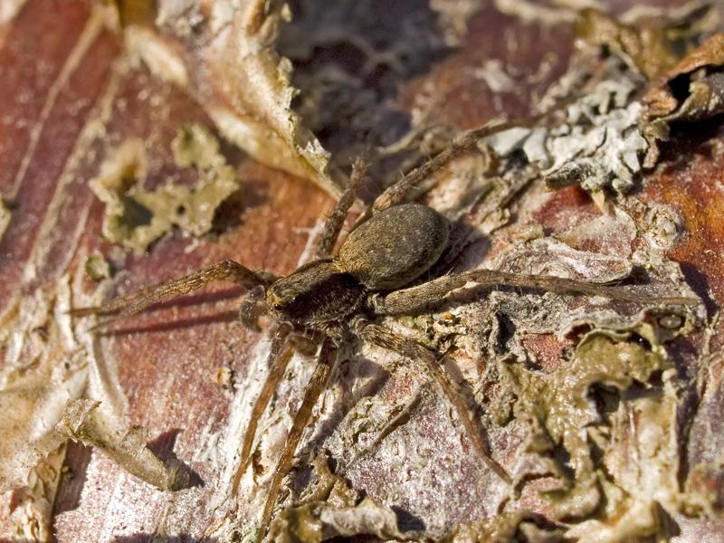 dato nettsteder for sex edderkopp